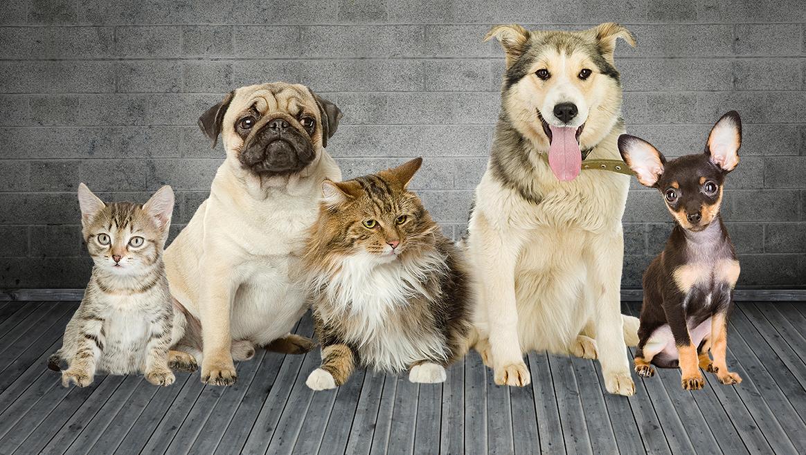 11 Zahlen zu Hund und Katz  (Bild: thinkstockphotos.de)