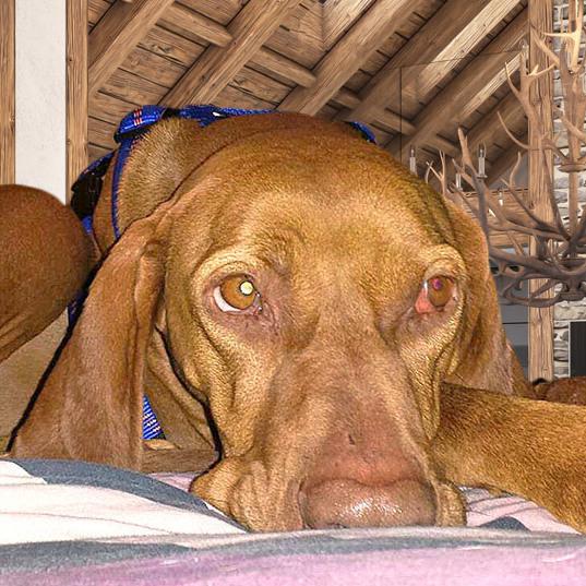 Ist das der traurigste Hund von Wien? (Bild: Privat)