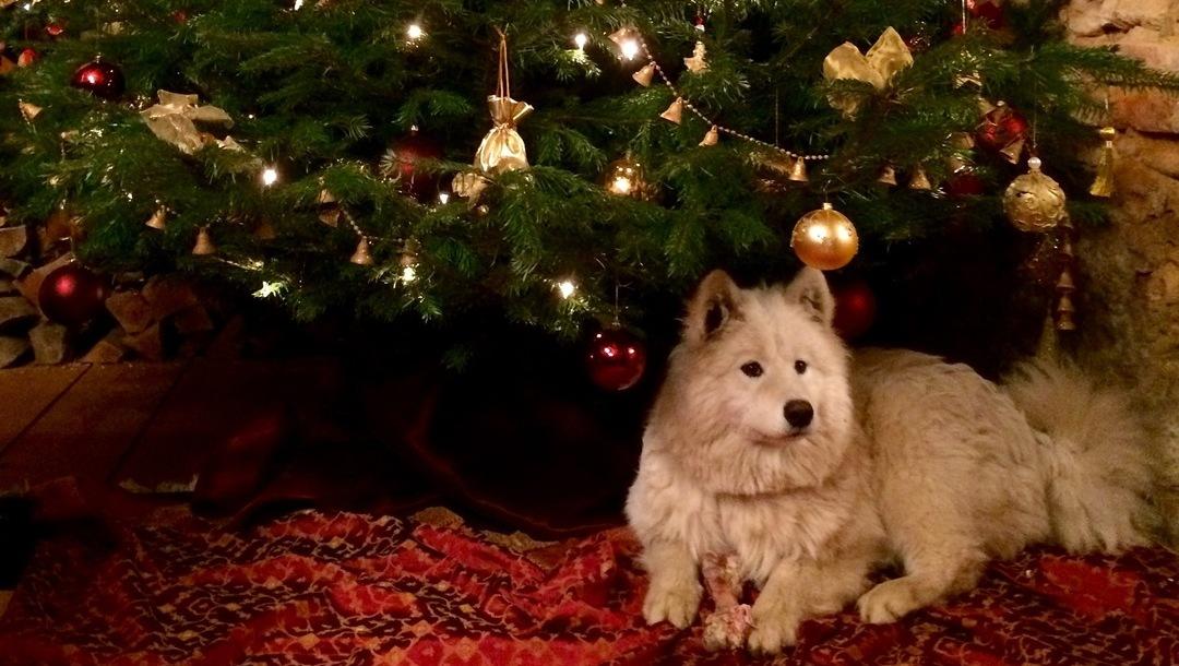 Weihnachtspost von schlittenhund bobbi neues zuhause - Bilder weihnachtspost ...