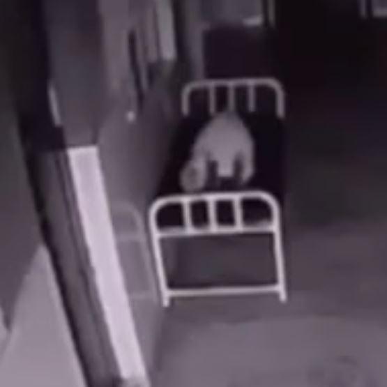 Dieses Video zeigt die Seele einer Toten (Bild: Youtube)