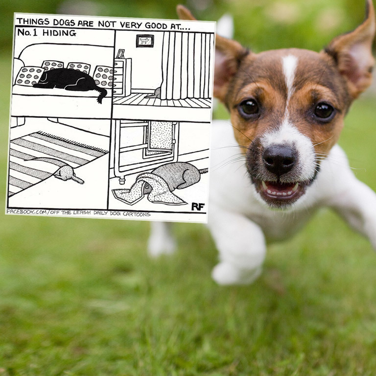 Das Hundeleben als Comic: bissig-komisch! (Bild: instagram.com/offtheleashcartoon / thinkstockphotos.de)