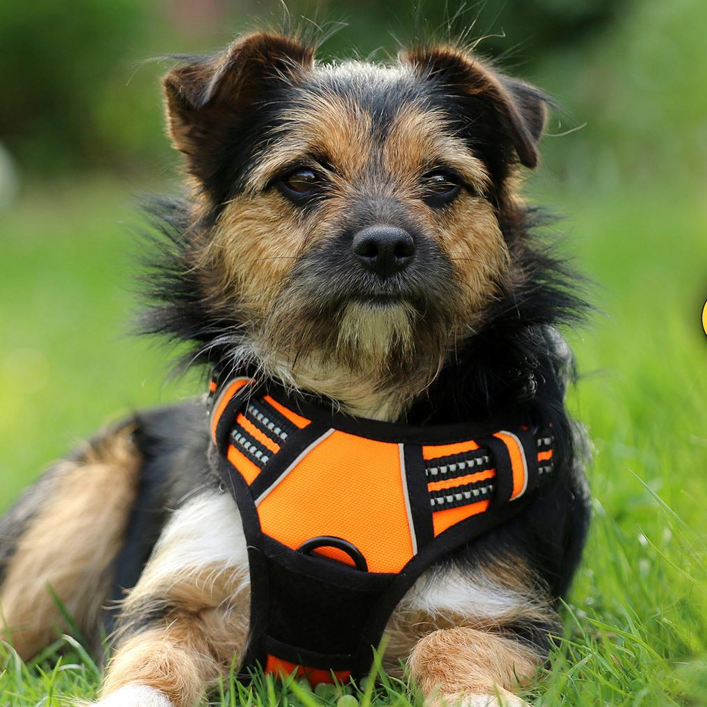 Giftköder: Warnung für Wiener Hundebesitzer (Bild: thinkstockphotos.de)