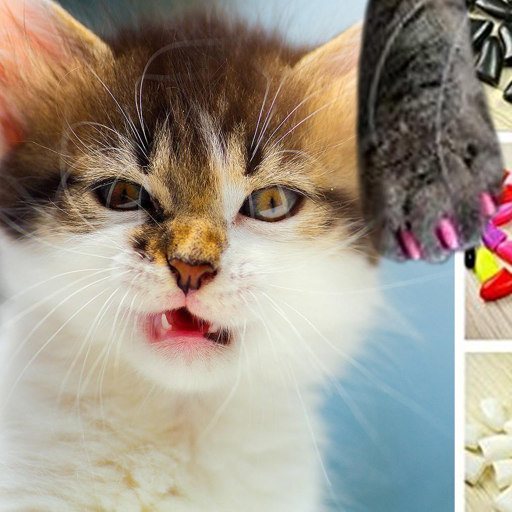 Pet-iküre: Falsche Nägel für die Katzenkrallen (Bild: stock.adobe.com, amazon.de)