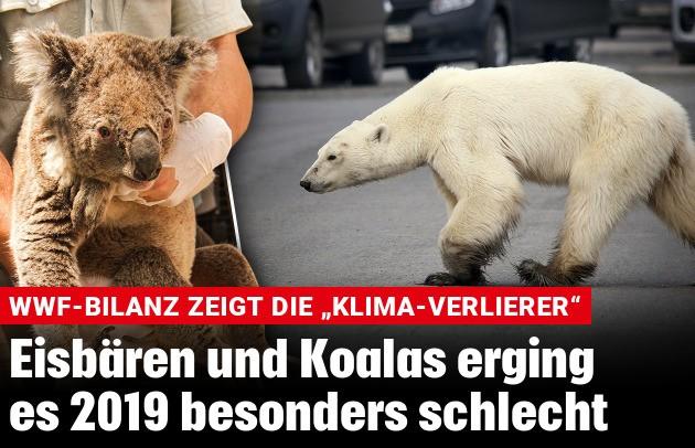 Eisbär Nachrichten Infos Kroneat
