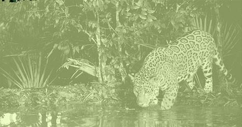 (Bild: WWF)