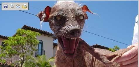 (Bild: http://samugliestdog.typepad.com/)