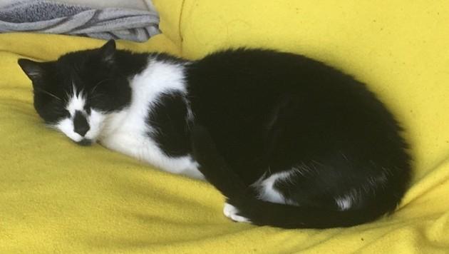Zigo wird vermisst (Bild: zVg)