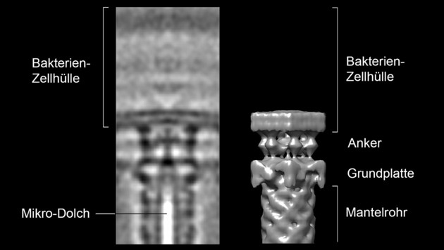 3D-Darstellung eines Mikro-Dolches (Bild: ETH Zürich/Désirée Böck)