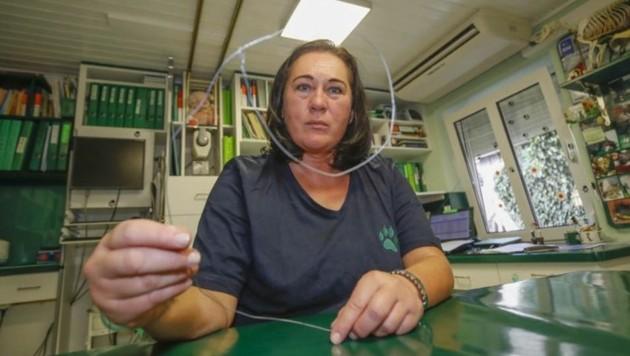 Tierärztin Sabine Lukas zeigt die vermutlich selbstgedrehte und gefährliche Drahtschlinge.