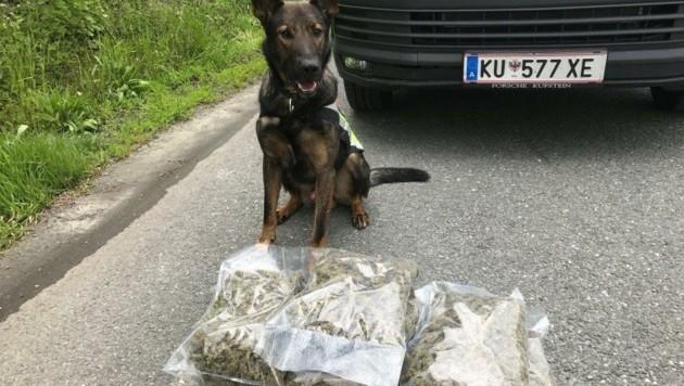 """Spürhund """"Greg"""" bereitete der Drogenfahrt von vier jungen Bosniern auf der Inntalautobahn ein Ende. (Bild: Finanzministerium)"""