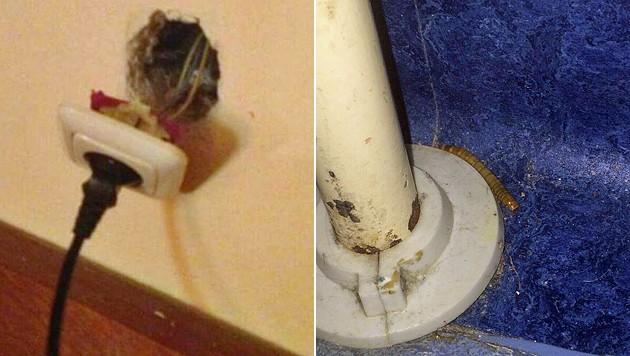 Steckdosen sind aus der Wand gerissen, Raupen machen es sich in den desolaten Zimmern gemütlich.