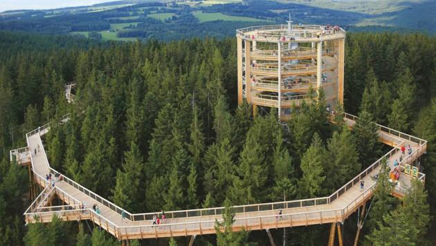 Baustart für Baumwipfelpfad am Grünberg   krone.at