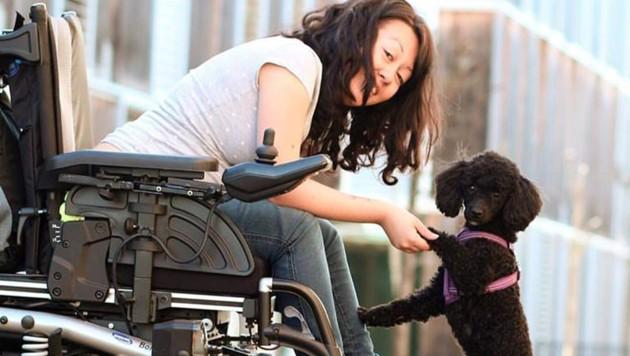 Die Zwergpudelhündin hat das Herz eines Löwen. Im März geht's zur Rollstuhl- Assistenzhundeprüfung. (Bild: Laura Gentile)