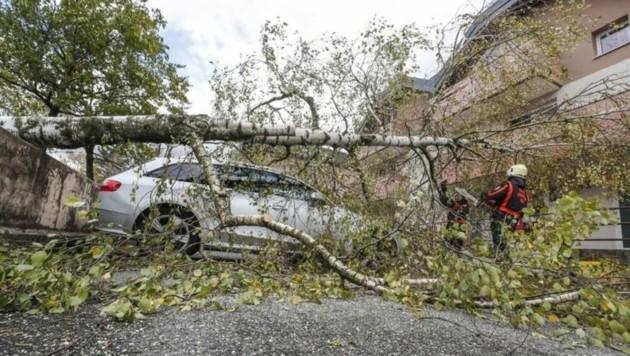 In der Moosstraße in Salzburg fiel ein Baum auf einen Audi. Die Berufsfeuerwehr im Einsatz. (Bild: Markus Tschepp)