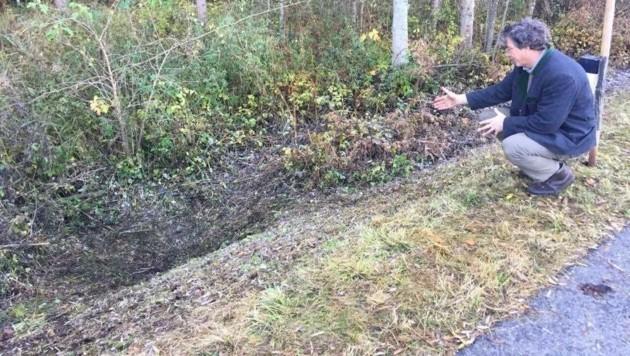 Wildbiologoe Thomas Huber hat sich den toten Bären direkt an der Fundstelle angeschaut. (Bild: Clara Milena Steiner)