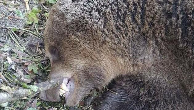 Im Straßengraben wurde das tote Tier entdeckt. (Bild: Clara Milena Steiner)