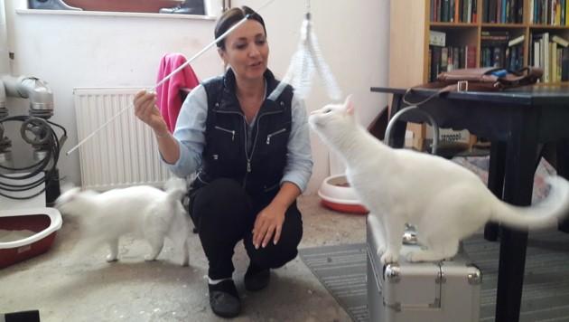 """Nussy"" und ""Dolly"" mit Katzenexpertin Petra Ott"