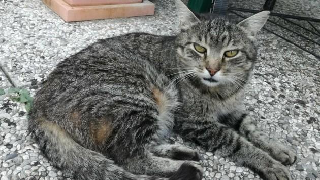 Der hübsche, gutmütige und betagte Laszlo, einst aus dem Tierheim geholt, wurde erschossen.