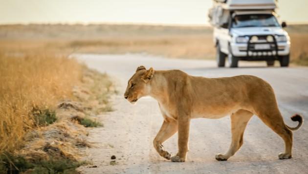 In Südafrika sind Wilderer sogar in Nationalparks aktiv.