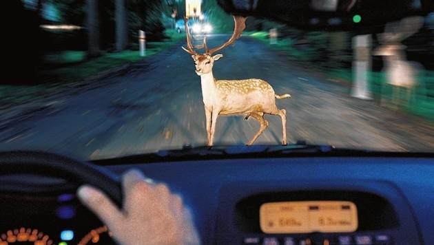 Vor allem auf gefährlichen Straßen mit Warnschildern ist besonders Acht zu geben. Langsames Fahren kann schlimme Folgen verhindern. (Bild: Allianz)