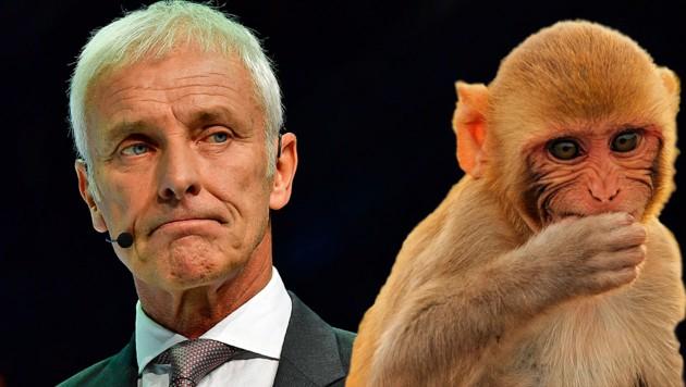 """VW-Chef Matthias Müller findet die Abgastests mit Affen """"unethisch und abstoßend"""". (Bild: AFP, stock.adobe.com, krone.at-Grafik)"""