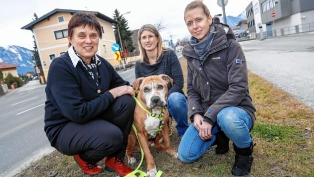 Tierärztin Dr. Christina Sigrist mit Pipo, Birgit Moser und Bettina vom PSV Hallein. (Bild: Markus Tschepp)