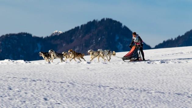 Manuela Petutschnig nimmt mit sechs Hunden in Mauterndorf teil. (Bild: Petutschnig)