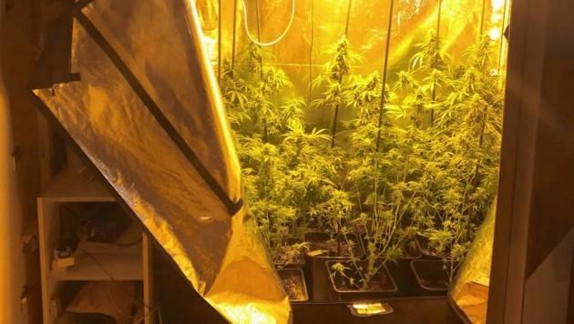 Die Cannabis-Plantage im Schlafzimmerschrank.