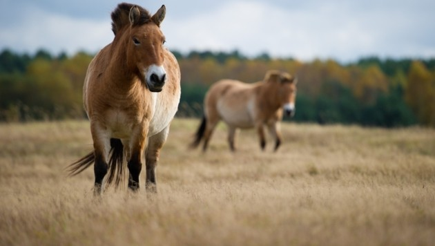 Geschichte der Pferde muss neu geschrieben werden