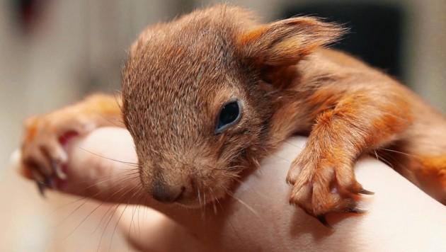 Kleine Wildtiere in großer Not