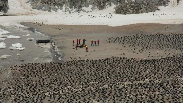 Die Forscher beim Zählen der Adeliepinguine auf den Danger Islands