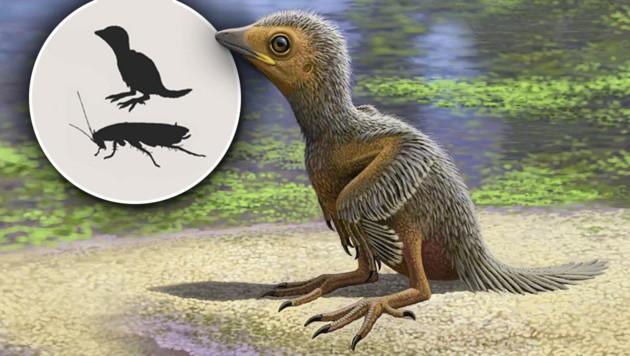 Künstlerische Illustration: So könnte das Urvogel-Küken ausgesehen haben