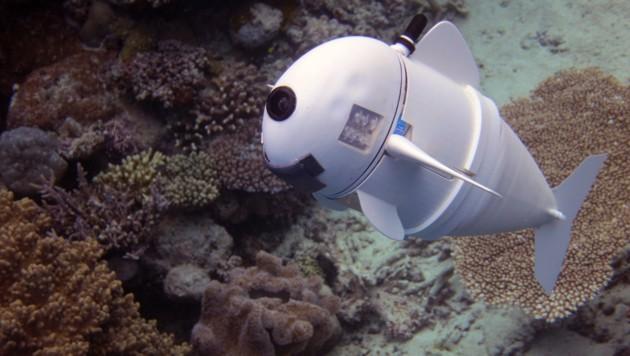 Neuer Unterwasserrobo wird von Fischen akzeptiert