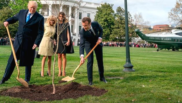 Trump und Macron mit Ehefrauen und Eiche (Bild: AP)