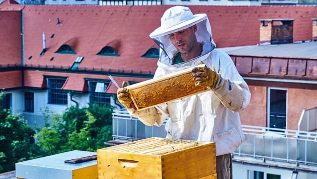 Matthias Pichler überprüft die Bienenstöcke am Dach des Magdas Hotel (Bild: Magdas Hotel)