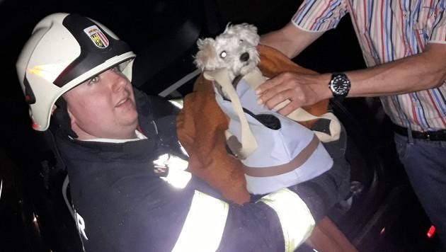 Hund-in-ausgebrannter-Wohnung-gefunden