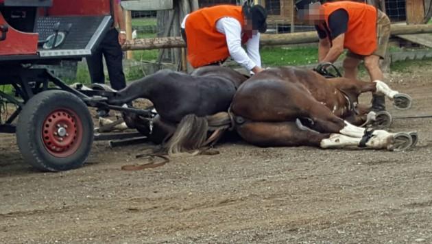 Zeugen griffen zur Kamera, als die beiden Pferde umkippten. (Bild: Hans-Walter Henke)