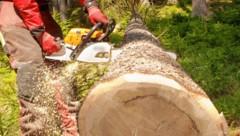 Schwer verletzt wurde ein 76-Jähriger bei Forstarbeiten in Nötsch im Gailtal (Symbolfoto) (Bild: Jürgen Radspieler (Symbolfoto))