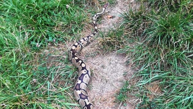 Diese Python soll Teil unseres Ökosystems sein?