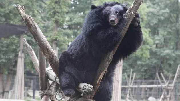 (Bild: Animals Asia)