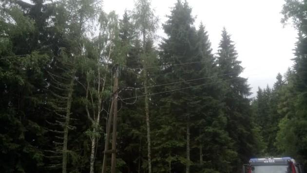Die FF Bodensdorf - Tschöran stand mit 20 Mann im Einsatz, um gemeinsam mit Technikern der KELAG die Stromleitung zu sichern und den Schwelbrand zu bekämpfen. (Bild: Feuerwehr Bodensdorf/Tschöran)