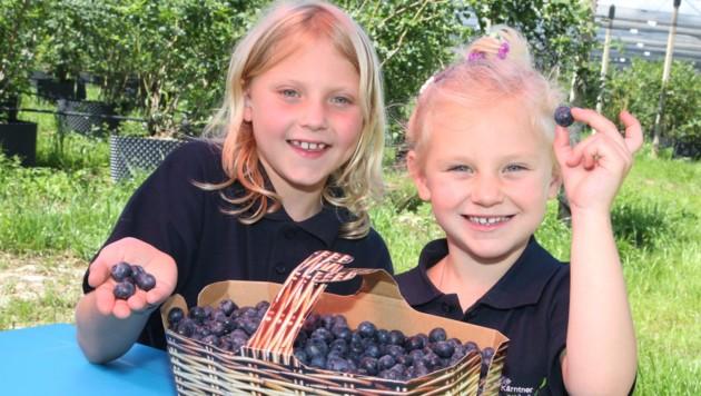 Speziell Kinder sind gefährdet, die Früchte von Heidelbeeren und Einbeeren zu verwechseln