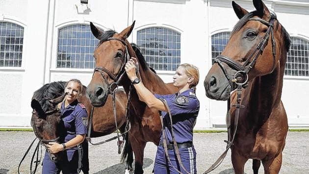 Drei der Pferde der geplanten Reiterstaffel in Wiener Neustadt (Bild: Klemens Groh )