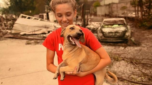 """Nach dem Feuer ihres Zuhauses in Redding hat Kambryn Brilz (12) ihren Hund """"Zoe"""" wieder. Ein Nachbar konnte den Vierbeiner vor den Flammen retten. (Bild: AFP)"""