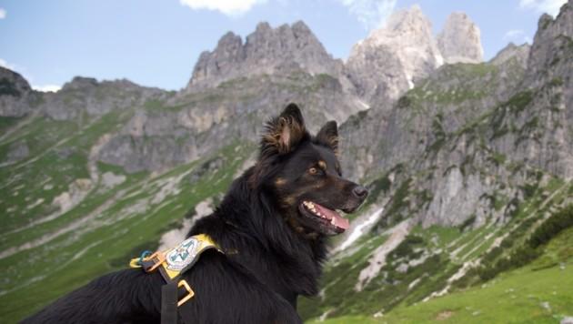 Ein eigens ausgebildeter Suchhund der Salzburger Bergrettung