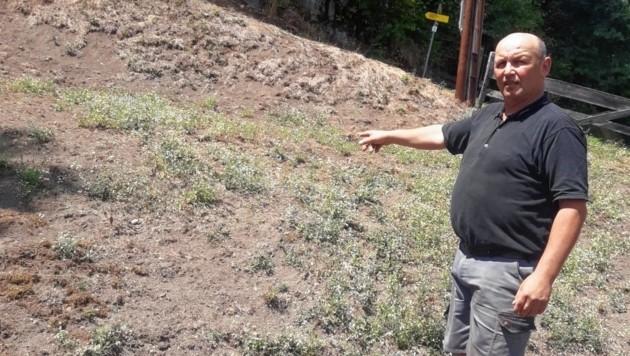 Gut 40 Hektar sind von Engerlingen befallen. Johann Unterweger auf einer der kahl gefressenen Wiesen. (Bild: Unterweger)