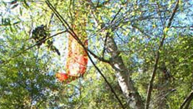 Paragleiter im Baum (Bild: AP)