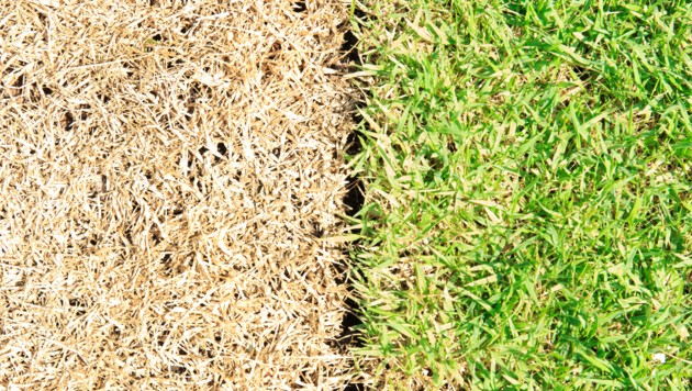 Wer seinen Rasen im Sommer nicht ausreichend gießt, läuft Gefahr, dass dieser verbrennt. (Bild: ©arcyto - stock.adobe.com)