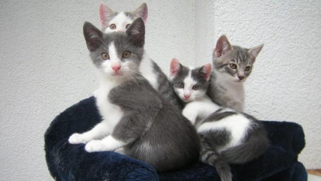 4 Brüder (Bild: krone.at-Leserin Silvia R.)
