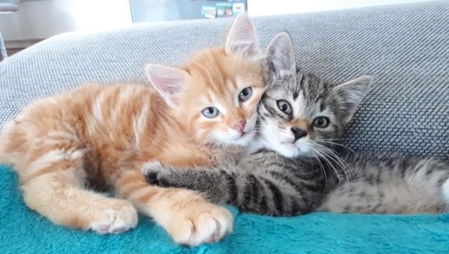 Tiger und Pumpkin sind schon nach kurzer Zeit unzertrennlich. (Bild: krone.at-Leser Florian K.)